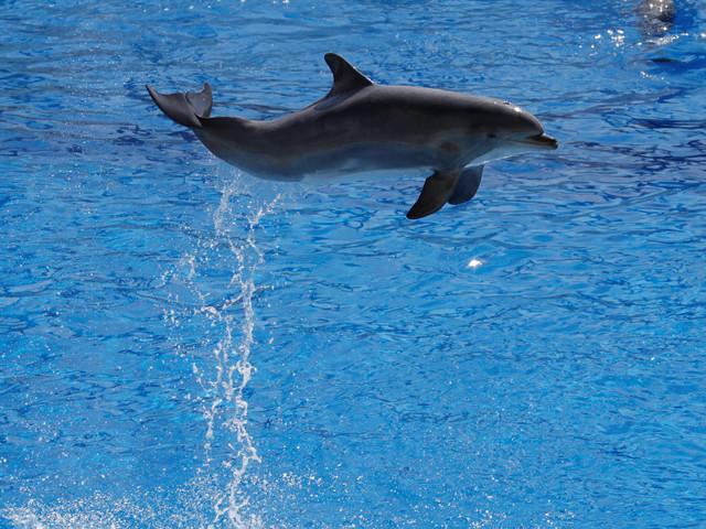 Le Conseil d'État maintient l'interdiction de la reproduction des dauphins en captivité (mais suspend une autre mesure)