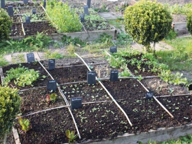 Essonne : des plants de légumes livrés à domicile à Bouray, Janville et Lardy