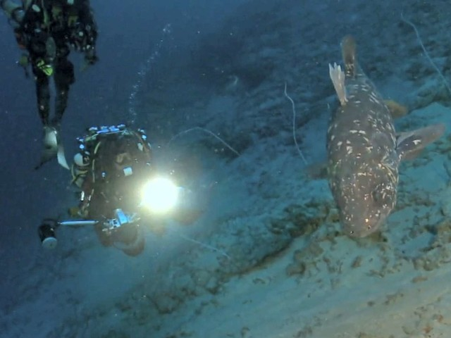 Méditerranée : quatre plongeurs resteront un mois au fond de l'eau