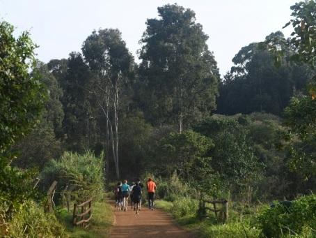 Le no man's land devenu écrin de verdure: à Nairobi, la forêt de Karura renaît