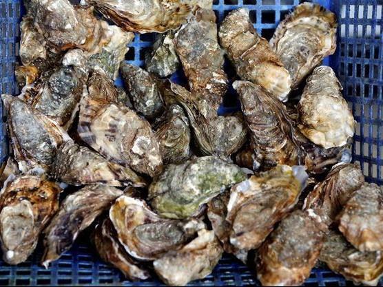 Morbihan : Quatre tonnes et demi d'huîtres volées