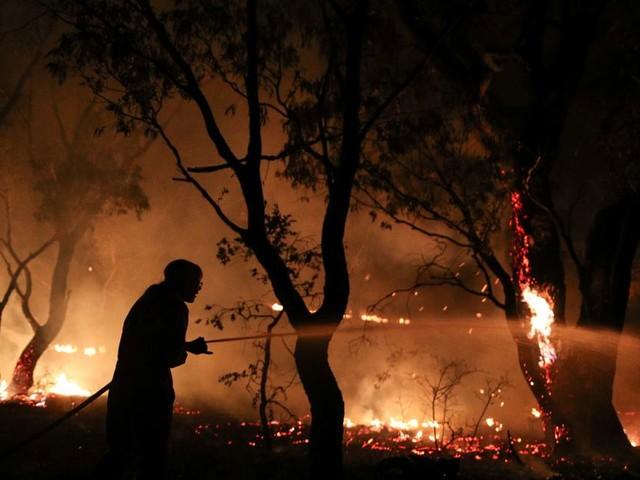 En Australie, des souris tuées par les incendies alors qu'elles étaient à plus de 20 km