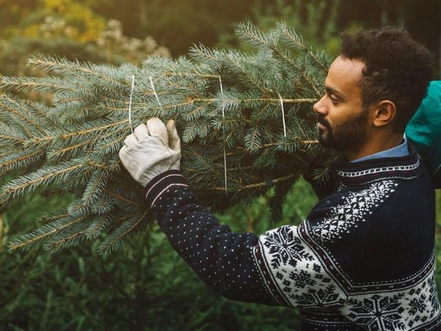 Peut-on acheter trop tôt son sapin de Noël?