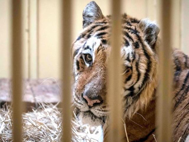 Une mesure forte à Ixelles: les écoliers n'iront plus au zoo, les sorties scolaires dans des parcs avec des animaux sauvages en captivité interdites