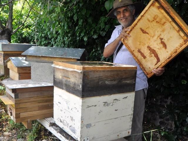 Devenu apiculteur sur le tard, le passionné et passionnant Francis Touzy dévoilera le monde des abeilles dimanche à Pamiers