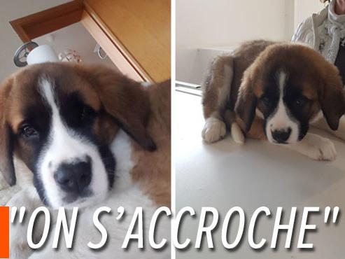 Hugo, le chiot d'Aurore, tombe malade deux jours après son achat: faut-il réduire l'arrivée des chiens depuis l'est?