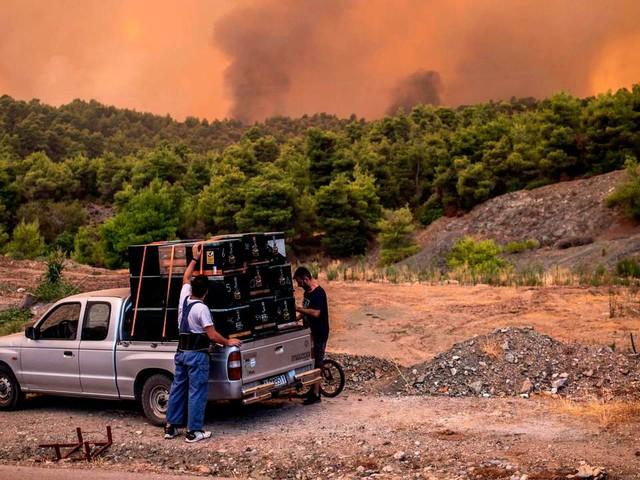 En Grèce, l'île d'Eubée ravagée par les flammes