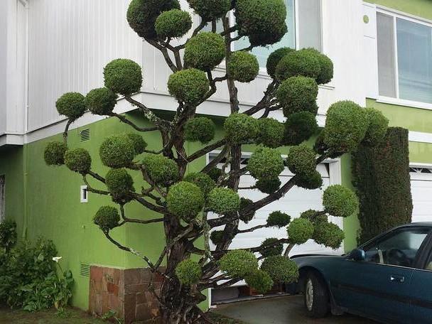 Extraordinary Trees in San Francisco