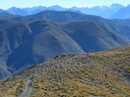 La Nouvelle-Zélande vise la neutralité carbone d'ici 2050