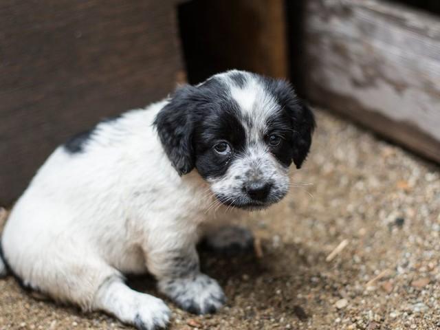 L'abandon des animaux fera l'objet d'une mission parlementaire