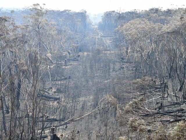 Australie : combien de temps faudra-t-il à la végétation pour repousser ?