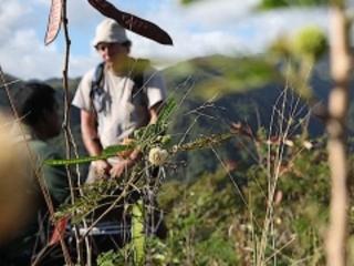 Planter et reboiser pour rendre La Réunion plus vivable
