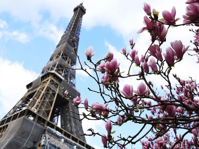 La Tour Eiffel rouvre après 9 mois, sa plus longue fermeture après-guerre