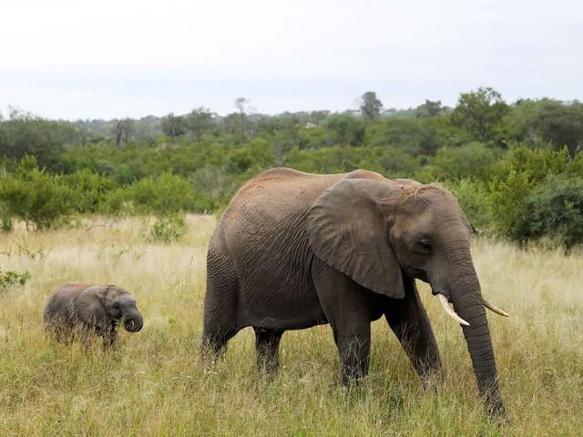 Espèces menacées : des députés européens demandent l'interdiction de la chasse aux trophées