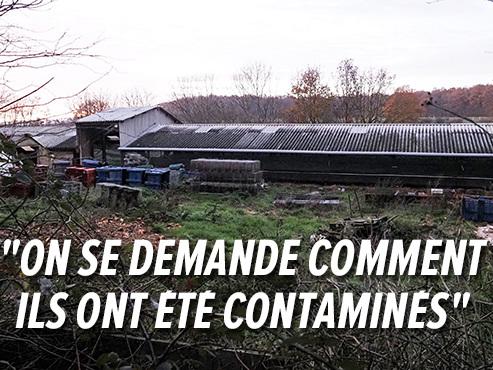 Un millier de visons abattus dans un élevage en France après la détection de cas de coronavirus