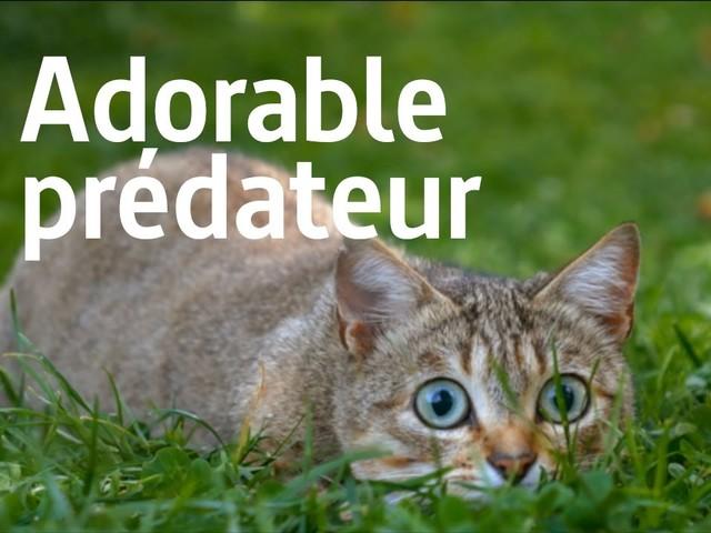 « Le chat, ce tueur si mignon » : un reportage qui changera peut-être votre regard sur ce félin