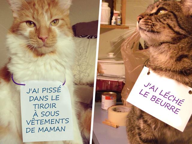 Top 10 des chats qui s'excusent pour leurs conneries, le meilleur du «Cat Shaming»