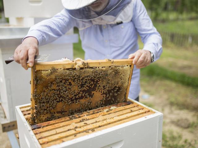 Région de Rabat Salé Kénitra : le secteur de l'apiculture en chiffres