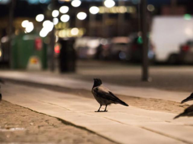Les humains ne sont pas les seuls à être touchés par la pollution lumineuse