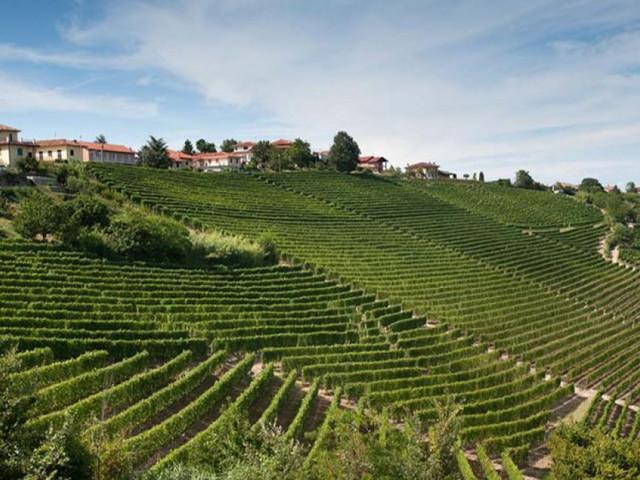 Une référence parmi les producteurs de vins du Piémont