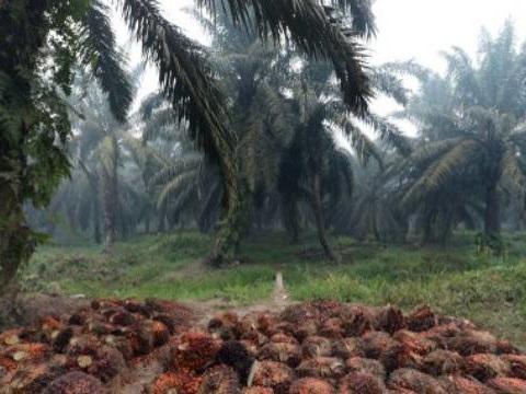 De l'huile de palme dans les voitures... Pourquoi la France est pointée du doigt