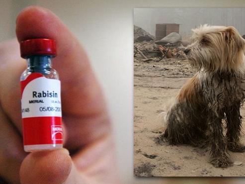 Le garçon de 10 ans mordu par un chien en vacances est décédé: ses parents ne l'ont pas vacciné contre la rage
