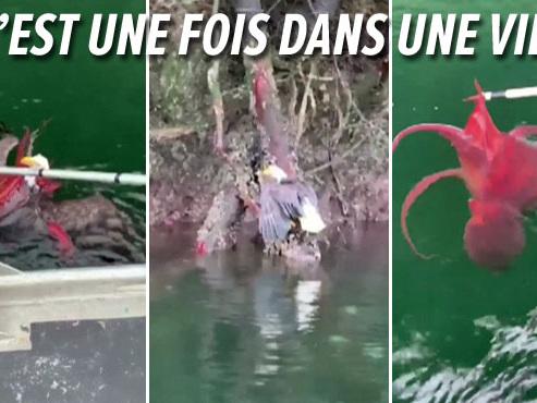 Au Canada, ces pêcheurs découvrent un aigle EMMÊLÉ avec une pieuvre: ils ont réussi à les séparer (vidéo)
