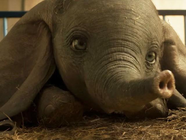 Découvrez la nouvelle bande-annonce déchirante de Dumbo de Tim Burton