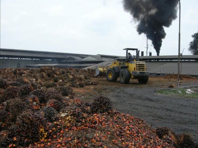 Les députés réintègrent l'huile de palme dans les biocarburants