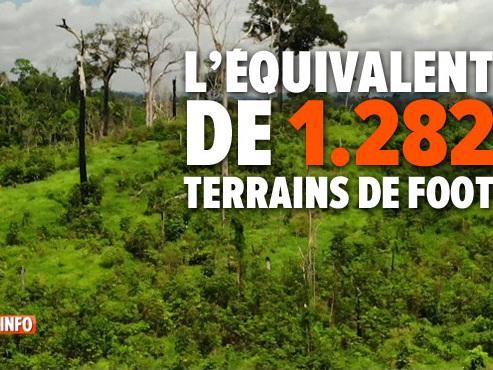 La déforestation de l'Amazonie s'est accélérée cette année