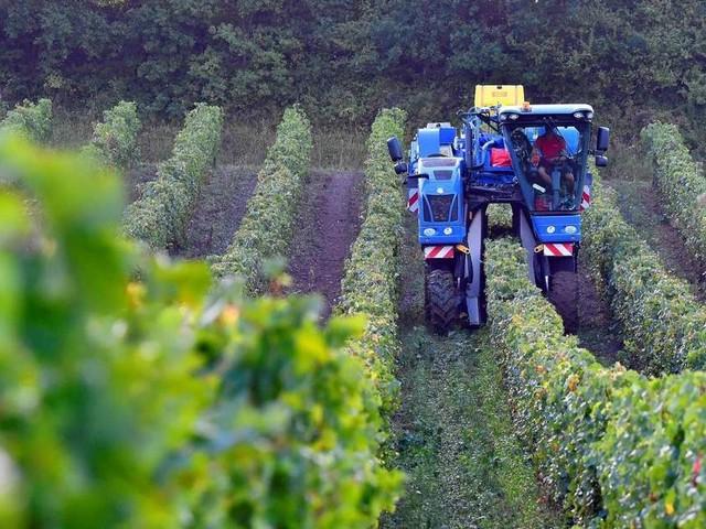 Sanctions américaines : mauvaise nouvelle pour les exportateurs de vins français