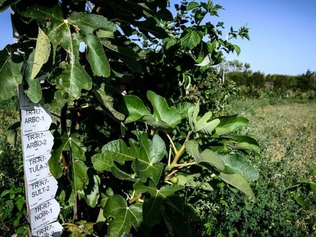 France: dans la Drôme, l'intelligence des arbres au service de la production fruitière