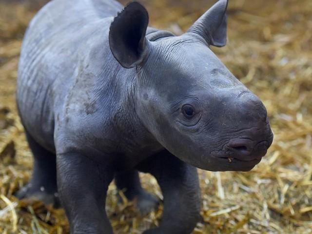 Après le rachat du zoo de Pont-Scorff, Rewild répond aux critiques