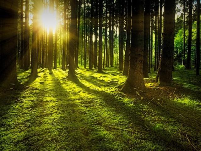 Idée détente : comment profiter des arbres après le confinement grâce à la sylvothérapie ?