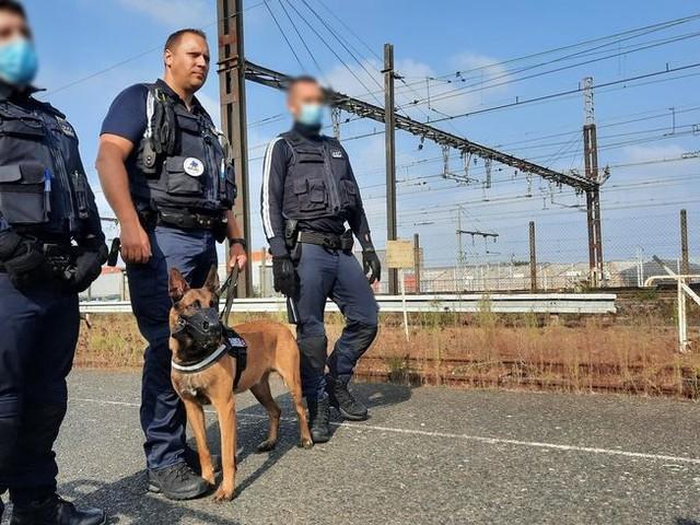 Indre-et-Loire : drone, équipe cynophile, caméras… la sécurité multifacette de la SNCF