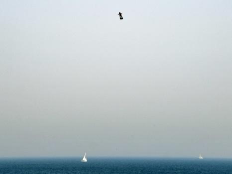 """Franky Zapata, l""""homme volant"""", est tombé dans la Manche et a été secouru"""
