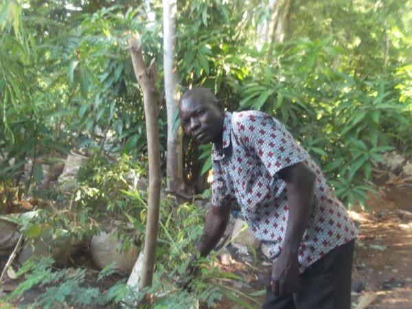 Vente de fleurs et plantes à Ouaga : un bon gagne-pain durant l'hivernage