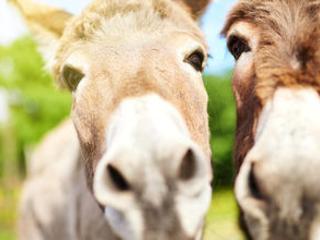 Pourquoi les ânes nous font du bien