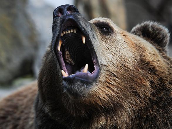 Un ours «tueur» immortalisé à 2.800 mètres d'altitude dans les Pyrénées – photo