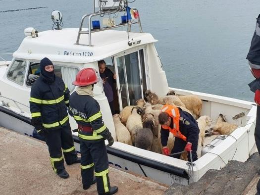 Roumanie: un cargo chavire, inquiétude pour 14.600 moutons à bord