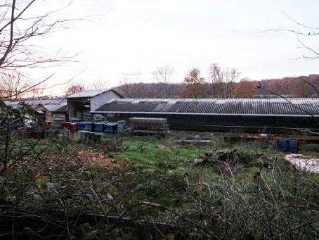 Un premier élevage de visons contaminé au Covid-19 en France