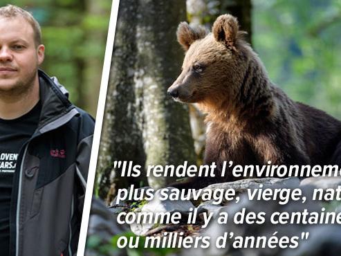L'ours renaît en Slovénie: avant, Miha rêvait de les tuer, aujourd'hui il les traque pour les observer