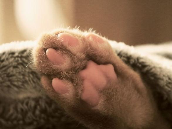 Un chat se réveille confus entre les pattes d'un golden retriever – vidéo