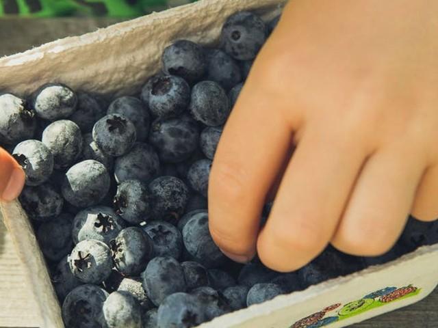 Montpellier retire le plastique des cantines : un grand pas pour la nature et la santé des enfants