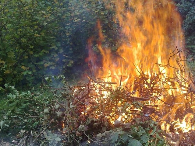 Confinement : attention, ne brûlez pas vos déchets verts, c'est interdit