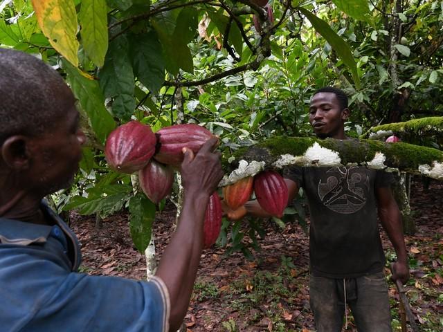 Salon du chocolat: la crise du cacao sous les paillettes de la fête