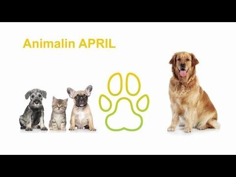 Assurance santé chiens et chats | APRIL