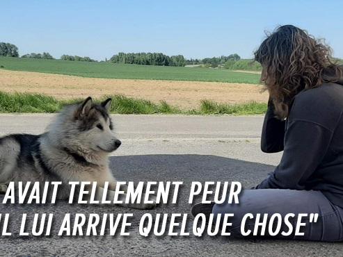 Mamour, un jeune Malamute, errait depuis plusieurs mois: Céline raconte l'opération de sauvetage à Anderlues (vidéo)