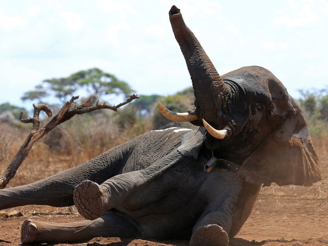 Cette décision de l'administration Trump va faire le bonheur des chasseurs d'éléphants