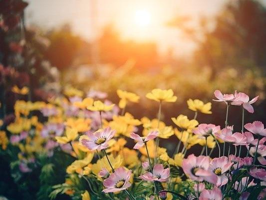 Comment concevoir un petit jardin ?